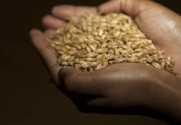 La route du grain : Présent dans les métiers de l'agriculture et dans les métiers de la transformation, VIVESCIA maîtrise toute la chaîne de valeur du grain