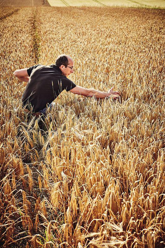 img-des-hommes-et-des-grains-agriculteur-champ-1