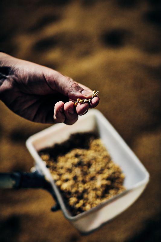 du grain au malt